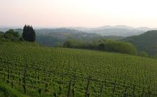 Gourmet vinothek piedāvā vīnus no Slovēnijas