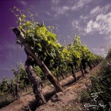 Gourmet vinothek piedāvā vīnus no ASV