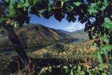 Dienvidāfrikas vīni Latvijā - Gourmet vinothek