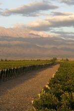 Itālijas vīni Gourmet vinothek veikalos