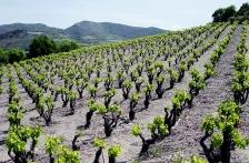 Francijas vīni Gourmet vinothek veikalos