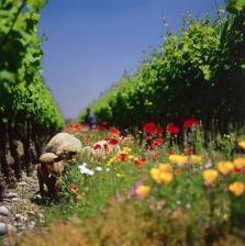Spāņu vīni Gourmet vinothek veikalos