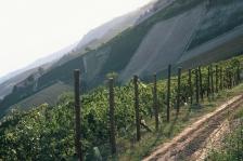 Vācijas vīni Gourmet vinothek veikalos