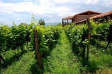 Gourmet vinothek Gruzijas vīni