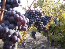 Vinothek Gourmet piedāvā vīnus no Austrijas