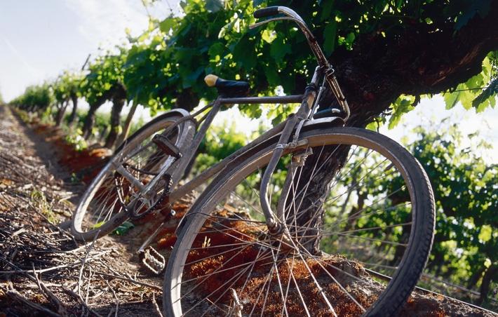 vasaras gourmet vīnu kolekcija